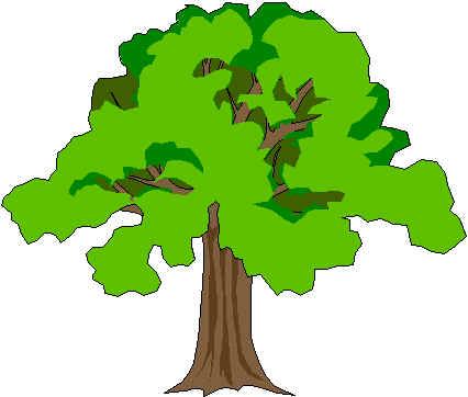 Home for Chioma albero