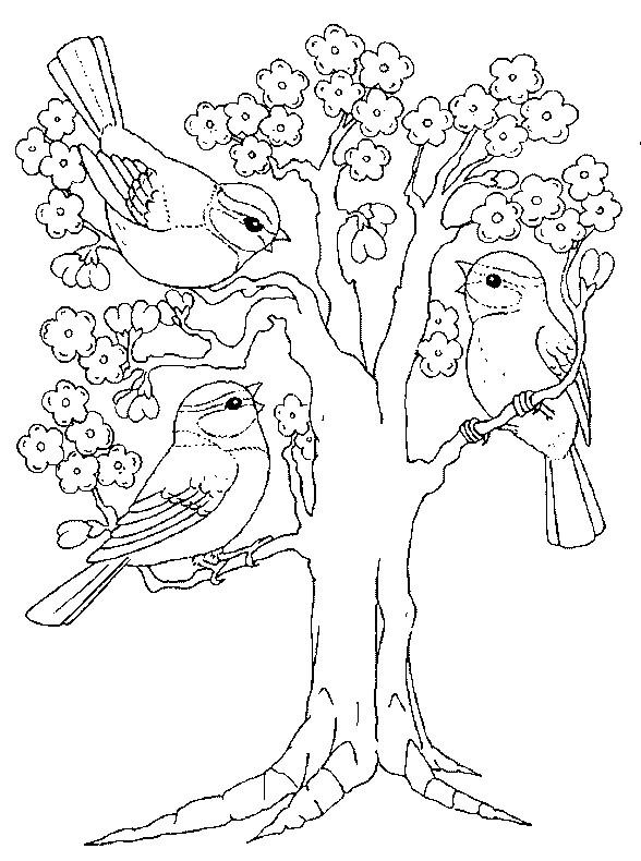 Disegni sulle stagioni - Dessin le printemps ...